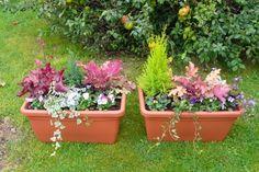 Faire ses jardini res d 39 automne fleurs pinterest - Jardiniere automne hiver ...