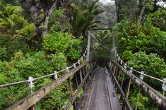 A photo guide to backpacking New Zealand's Heaphy Track, one of the iconic great walks. A must see if you're considering hiking it. Milford Track, New Zealand Holidays, New Zealand Houses, Great Walks, New Zealand Travel, Life Is An Adventure, South Pacific, Australia Travel, What Is Like