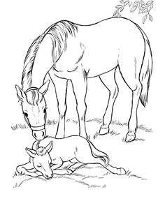 Horse coloring page | Mare and her sleeping foal