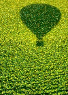 A hot air balloon's shadow over a Sunflower field by Avi Revivo World Of Color, Color Of Life, Go Green, Green Colors, Pretty Green, Bright Green, Sunflower Fields, Hot Air Balloon, Air Ballon