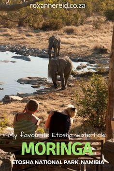 Why Moringa waterhole at Etosha is my favourite #Namibia #africa #travel