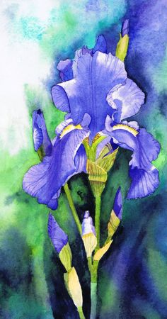 Blue Iris by watercolour painting by Julie Horner UK artist