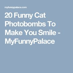 The Photobombing Cat Photobombing Cats Pinterest - 20 hilarious cat photobombs