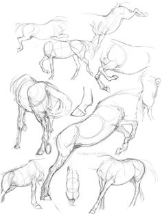 not only lazy, but smart too! — Horse bodies, 06/01-15 notes; The legs are shorter...