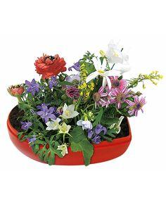 Herz mit Blumen-Samen rot 10x10x6cm. Sagen Sie Ihrer Mutter Danke mit diesem wunderschönen Muttertags-Geschenk in From eines Herzens.
