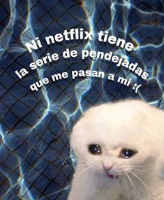 Créditos a quien corresponda Cat Memes, Dankest Memes, Funny Memes, Reaction Pictures, Funny Pictures, Memes Amor, Funny Spanish Memes, Cute Love Memes, Wholesome Memes