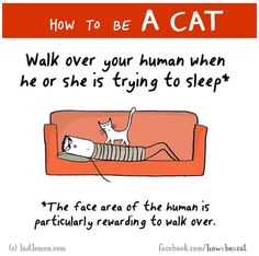 Illustrated: How To Become A Cat Today!
