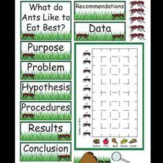 Ants Science Fair Project product from Kindergarten-Supplies on TeachersNotebook.com