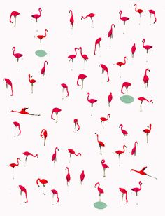 designersof:    flamingoes  check out my blog here