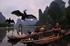 Li River Cormorant, Guilin, China by ohmytrip, via Flickr
