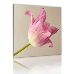 Obraz - Kwiat tulipanu