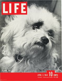 "April 3, 1944: ""Glamor Dogs"" (yes, we wrote Glamor)"