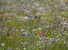 Plus de fleurs, moins de gazon : le jardin gagnant  Un bout de prairie fleurie, des brassées de fleurs des champs, des topiaires couvre-sol ou des vivaces tapissantes : pour vous aider à réduire la pelouse, voici quatre idées de massif.