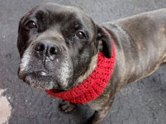 ❤️SAFE❤️Manhattan Center EBONY – A1066111 FEMALE, BL BRINDLE, PIT BULL MIX, 3 yrs STRAY – STRAY WAIT, NO HOLD Reason STRAY Intake condition UNSPECIFIE Intake Date 02/27/2016, From NY 11412, DueOut Date 03/01/2016,