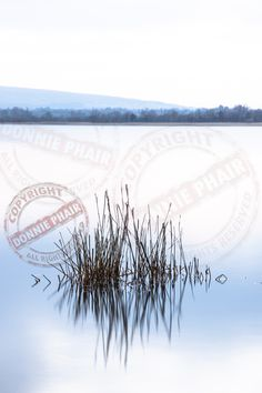 """Reeds"" on Upper Lough Erne. www.donniephair.com"