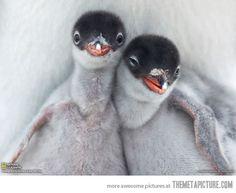 Ridiculously photogenic penguins