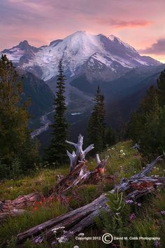 """""""Mount Rainier National Park, August is a great time to visit for wildflowers and occasionally you get some dramatic light."""" Photo by David Cobb."""