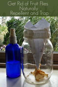 Get Rid of Fruit Flies Naturally - Fruit Fly Trap and Fruit Fly Repellent Spray