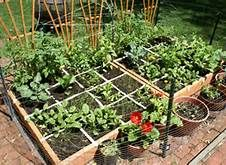 Small Garden Ideas Vegetables i have my garden box all put together now and the plants all