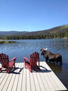 Grand Lake Vacation Rental - VRBO 392971 - 6 BR Northwest House in CO, Large Lakefront Log Cabin W/Private Dock: Perfect for Reunions (I wonder if the Moose visits often? Into The Woods, Cabins In The Woods, Le Havre, Seen, Tier Fotos, Mundo Animal, Lake Life, Colorado Springs, Grand Lake Colorado