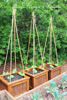 Eine optimale Halterung für Rankenpflanzen >> diy Planter Boxes, Growing Green Beans, vegetable garden