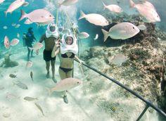 Caminata Submarina en Xcaret!  Sea Trek en Xcaret es una caminata submarina única bajo las cálidas aguas del Caribe México. No necesitas saber bucear, ¡ni siquiera saber nadar!