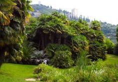 Arboreto di ARCO - Arco