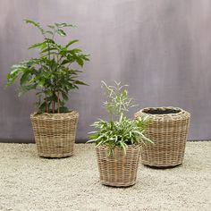 great round-up of baskets to plant fiddle leaf fig in! / Watertight Rattan Taper Pot from Terrain Rattan Planters, Indoor Planters, Garden Planters, Planter Pots, Basket Planters, Indoor Garden, Garden Basket, Ball Decorations, Fiddle Leaf Fig