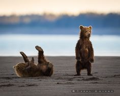 Cubs Will Be Cubs by Terry Koyama on 500px