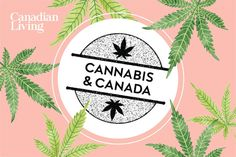 EVERYTHING YOU NEED TO KNOW ABOUT CANNABIS IN CANADA