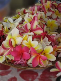 Plumeria, a fragrance which immediately makes my face smile and my soul sing. Frangipani Wedding, Plumeria Flowers, Hawaiian Flowers, Hawaiian Leis, Lilies Flowers, Exotic Flowers, Tropical Flowers, Colorful Flowers, Beautiful Flowers
