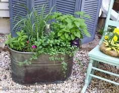Natural Mosquito Repelling Planters