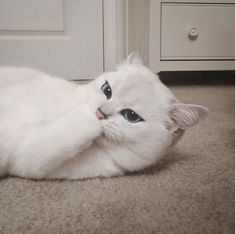 Coby might be the most beautiful cat on the Internet: Meet Coby the cat