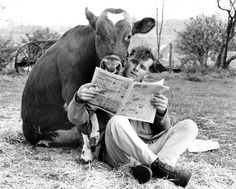 Man and cow reading the newspaper .if you go you won't have to worry about mad cow disease. Farm Animals, Animals And Pets, Funny Animals, Cute Animals, Old Photos, Vintage Photos, Tierischer Humor, Cute Cows, Cow Art