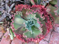 10 Best Succulents - lots of really cool succulents with unusual colors and patterns