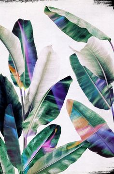 tropical #1 Canvas Print by LEEMO