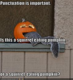 Punctuation is important. Is this a squirrel eating pumpkin, or a squirrel-eating pumpkin?
