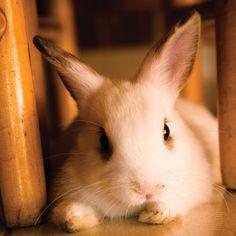 Enjoying Your Rabbits as Pets - Animals - GRIT Magazine