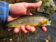 Usa Fishing, Trout Fishing, Outdoor Fun, Outdoors, Camping Ideas, Farming, Wood, Homesteading, Deep