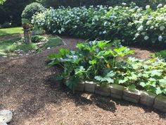 2017 vegetable bed