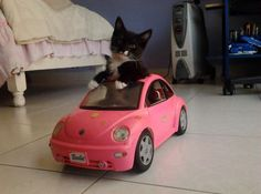 My Kitty driving my Barbie Car by MeiryAllyn.deviantart.com on @deviantART