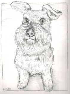 'Bailey' the schnauzer. My sister asked me if I would do a portrait of her dog. He such a clever dog and wanted to try and capture that look he has in his eyes. This one is done in 5 different types of graphite pencil (4B, 2B, HB, H and H2)
