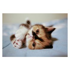 Cute Overload :D ❤ liked on Polyvore featuring animals, cats and photo