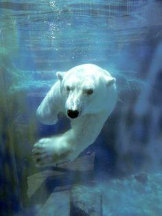 polar bears are my favorite
