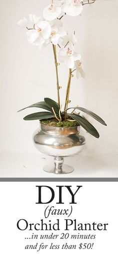 Charming in Charlotte: DIY Orchid Planter