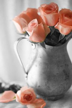 Soft Peach Colored Roses ~ Color Splash