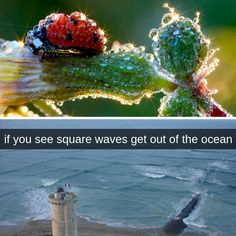 Really Funny Memes, Stupid Funny Memes, Hilarious, Cool Pictures, Funny Pictures, Wtf Fun Facts, Natural Phenomena, Amazing Nature, Mind Blown