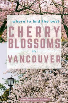 Visiting Vancouver in the spring? Here's how to find the best cherry blossoms in Vancouver! The vancouver cherry blossom festival is one of the best things to do in vancouver in spring and here's your guide for how to find the best cherry blossoms! Solo Travel, Travel Usa, Columbia Travel, British Columbia, Travel Tips, Travel Abroad, Travel Guides, Toronto Canada, Montreal Canada