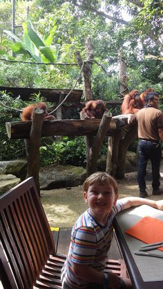 Singapore with kids - The Wandering Mum Family Travel Blog - Family Travel, Travel with Kids, Fun Days Out, Family Travel Blog Travel With Kids, Family Travel, Singapore With Kids, Fun Days Out, Kids Fun, Great Places, Things To Do, Activities, How To Plan