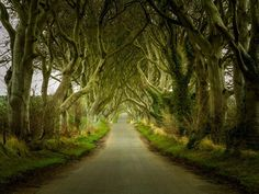 Dark+Hedges,+Northern+Ireland!+The+gnarled+trees+make+this+drive+one+of+the+most+beautifully+scary+paths+in+the+world.